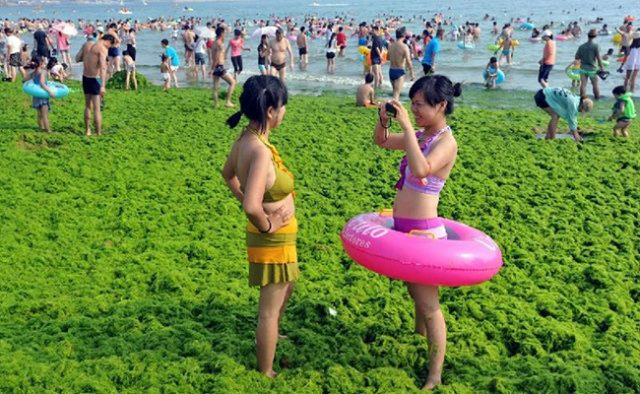 China Algae Bloom