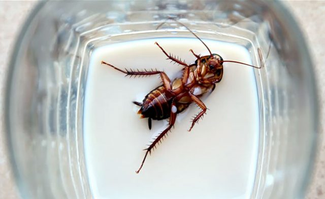 Cockroach milk is the next superfood?