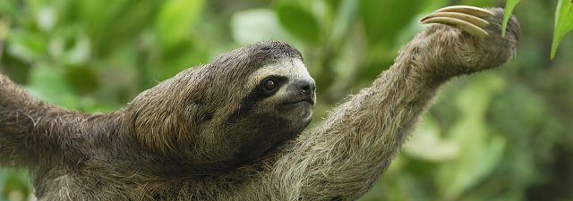 Animal Meditations Sloth Tree