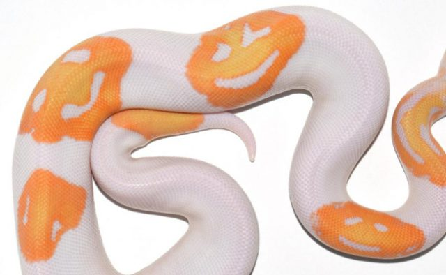 snake with smiley pattern