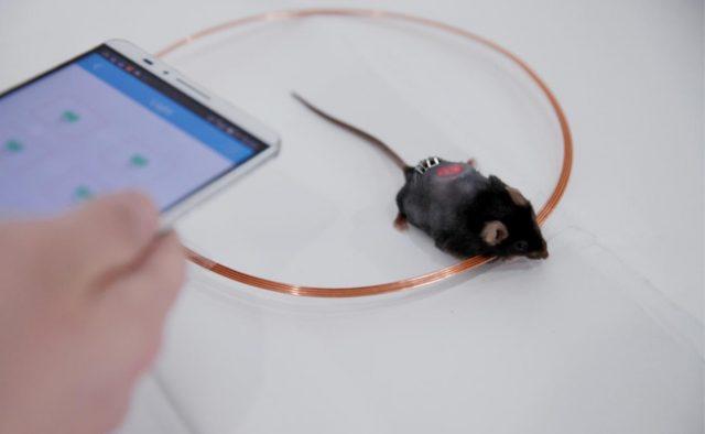 blood sugar regulated through smartphone app
