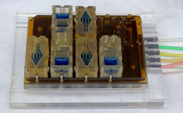 a replicate female period on a computer chip