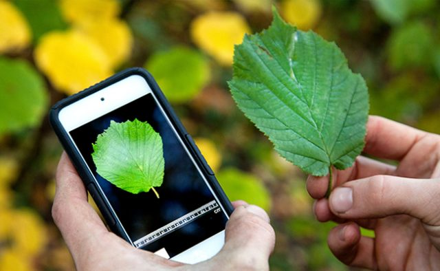 Shazam for Plants app identifies plants helps get to know old nature