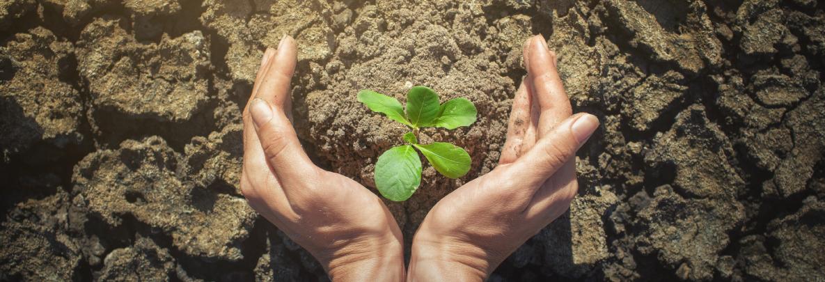 terre climat plante
