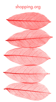 Flyer - Pink leaves