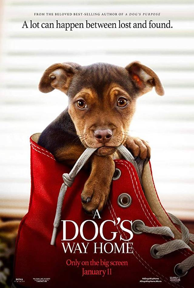 A Dog's Way Home Teaser Poster USA