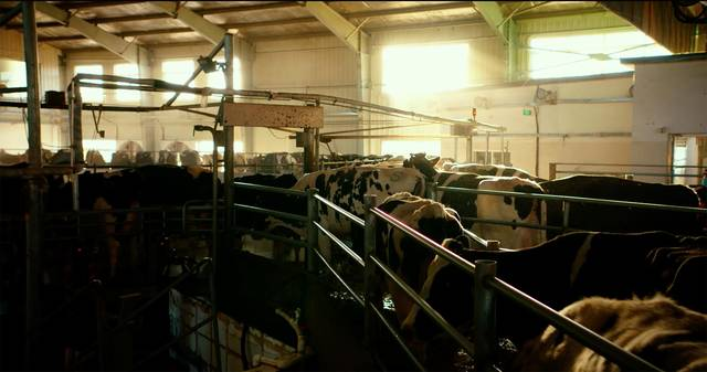 The milk system film documentario foto 32