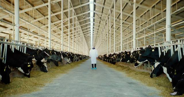 The milk system film documentario foto 9