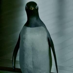 Quello non è il mio pinguino