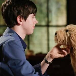 Un ragazzo e il suo cane