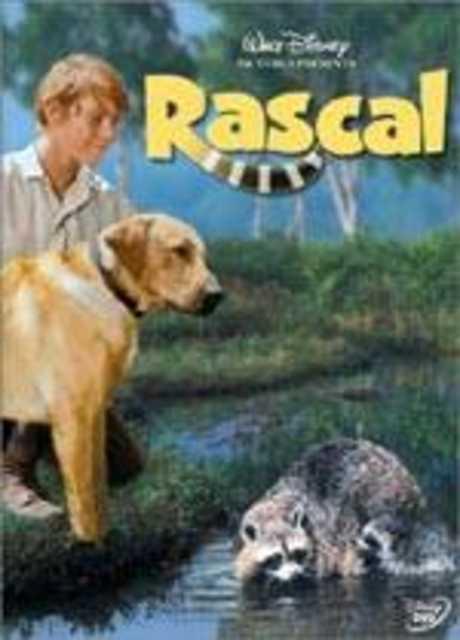 Rascal, l'orsetto lavatore