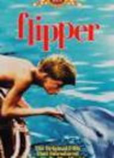 Il mio amico delfino