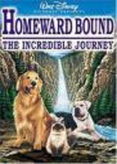 L' incredibile avventura