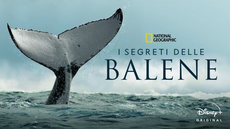 I segreti delle balene