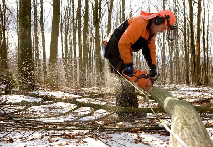 Skogsbrukstjänster under vintern