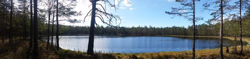 bild 4 av Skogsäventyret