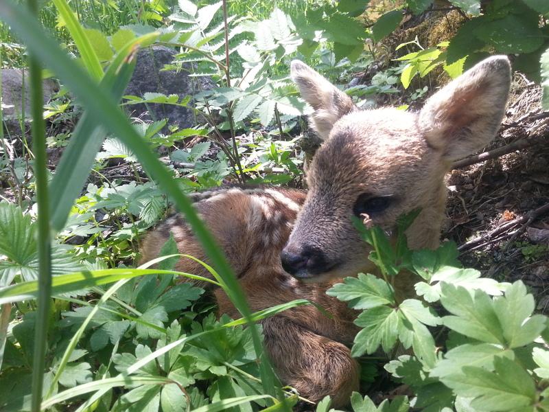 bild 3 av Skogsäventyret