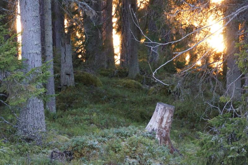 Första bild av Skogsäventyret