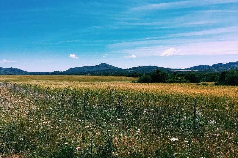 Miljöbild. En guldfärgad äng, blå himmel och berg i fjärran.