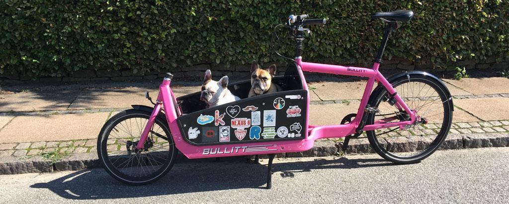 Rosa lastcykel med två hundar i