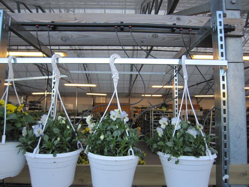 Vid bevattning av container- eller krukodlade produkter inom gardencenters och plantskolor kompletteras ofta med droppbevattning.Från en droppknapp ledsvattnet ner i containern eller krukan med hjälp av slang och pinne.