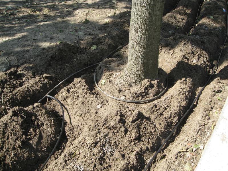 Droppslangsring runt träd för extra stödbevattning