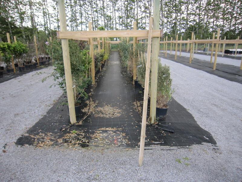 Ogräsbekämpning på plantskola med marktäckväv