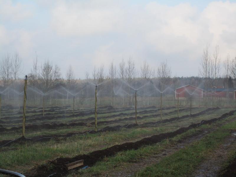 Frosskyddsbevattning med Mega Net spridare, under drift