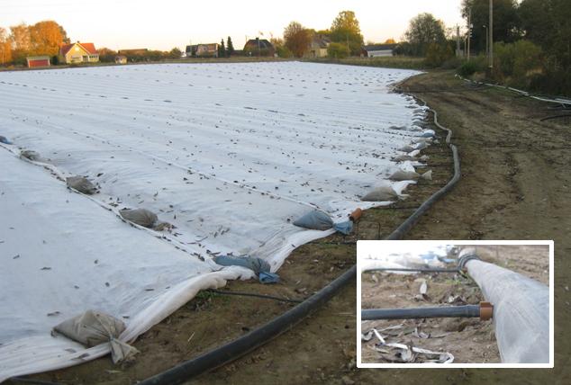 Droppbevattning till jordgubbsodling ger en halverad vattenförbrukning jämfört med spridarbevattning