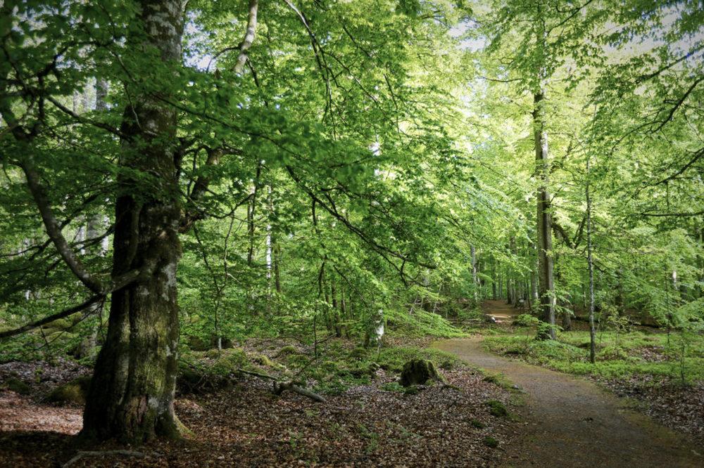 Åsnen national park forest