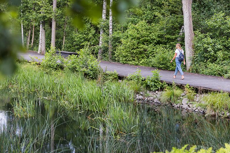 Cykla i naturen i Växjö.