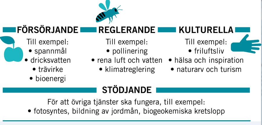 Ekosystemtjänster så som att hyra bin delas in i de fyra grupperna: försörjande, reglerande, kulturella och stödjande. Bild: Naturvårdsverket