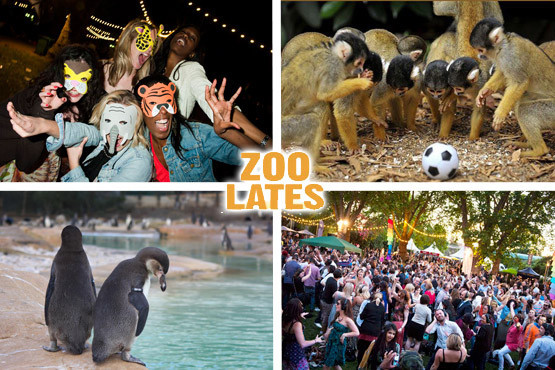 £10 instead of £20 for a ticket to Zoo Lates on the 13th July, at London Zoo - party with the penguins after hours & save 50%