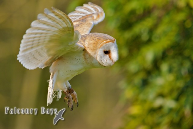 £19 for a 2 hour Owl encounter experience for 1 or £35 for 2 people with Falconry Days, Newcastle – have a hoot and save up to 51%