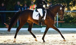 Equestrian Dressage Grand Prix Team and Individual Day 2 TOEQD02 - 2020 Games in Tokyo