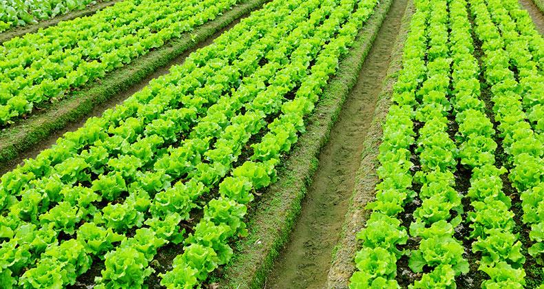 agroalimentarias-empresas-ayudas