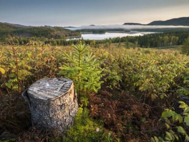 Statskog med rekordhøy skogplanting