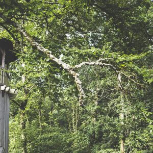 tree house wedding in Hampshire