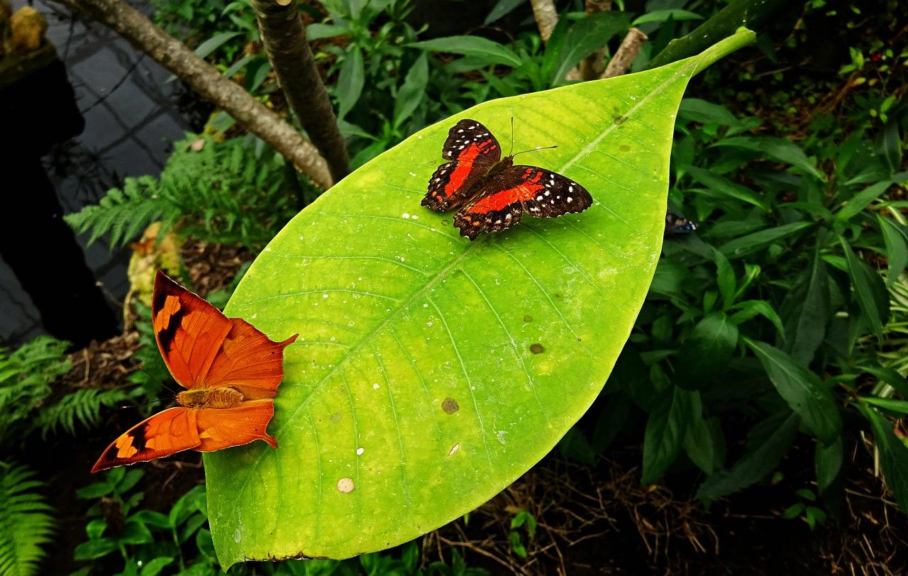 Butterfly 4106494 1280