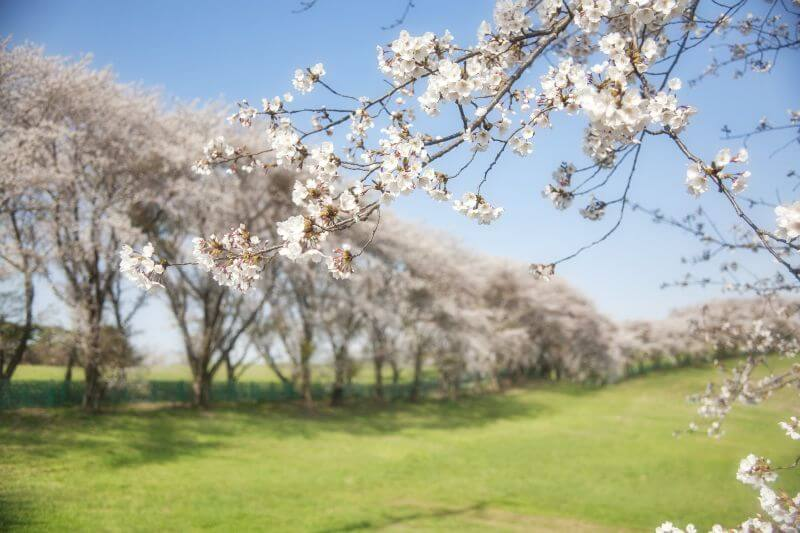 stromy kvetou v máji