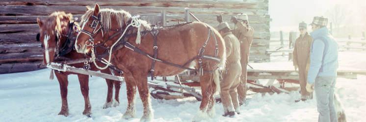 valentynska vyjizdka na koni