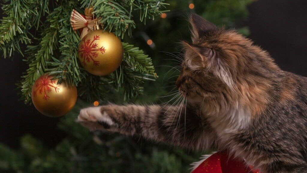 cat-christmas-vánoce