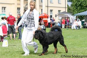 22_worlddogshow2008-bhadra-rishiwa-z-kaskay