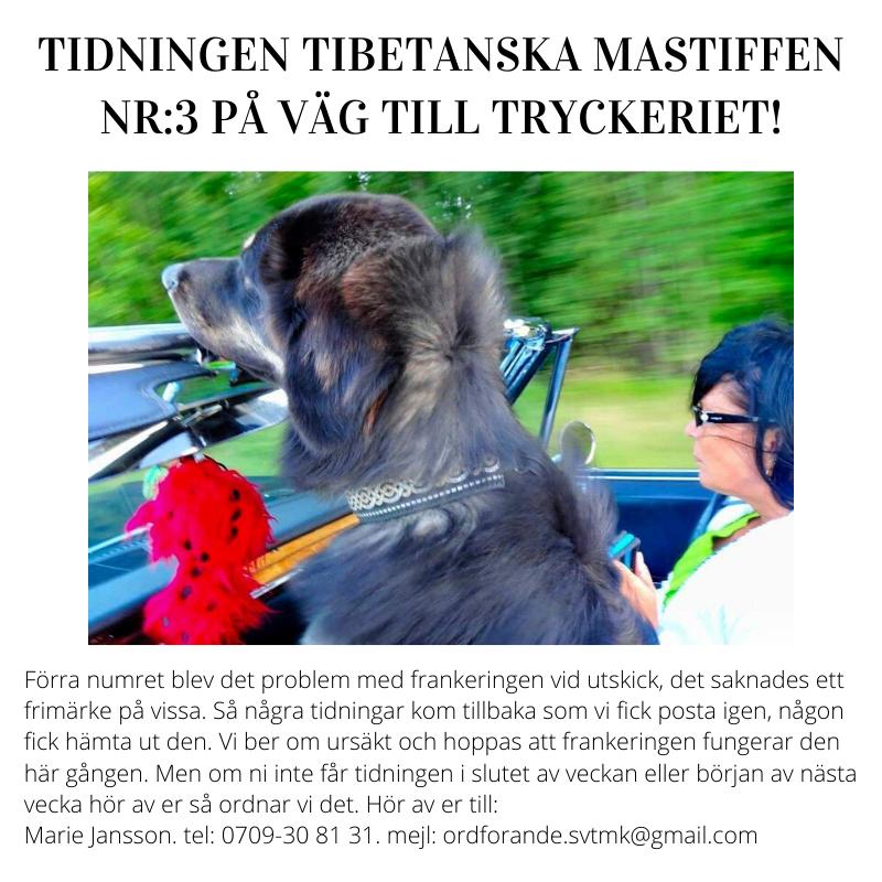 tidning3