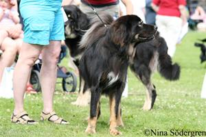 21_worlddogshow2008-fahrenhait-f-son-kha-pah