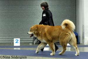 48_mydog2010-cenge-z-kacinske-louky
