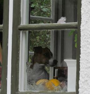 Siggan i fönstret