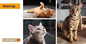 kattens dag hornbach