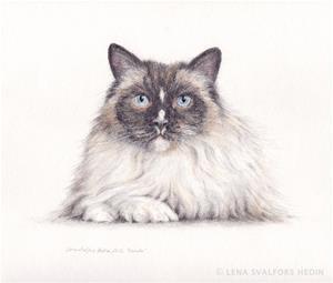 katt_portratt_teckning_cat_drawing