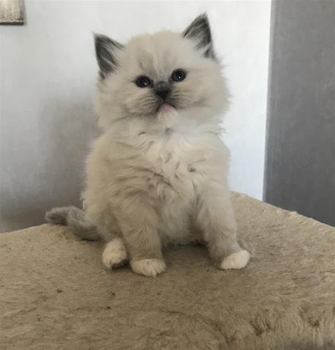 Marie 6,5 vecka